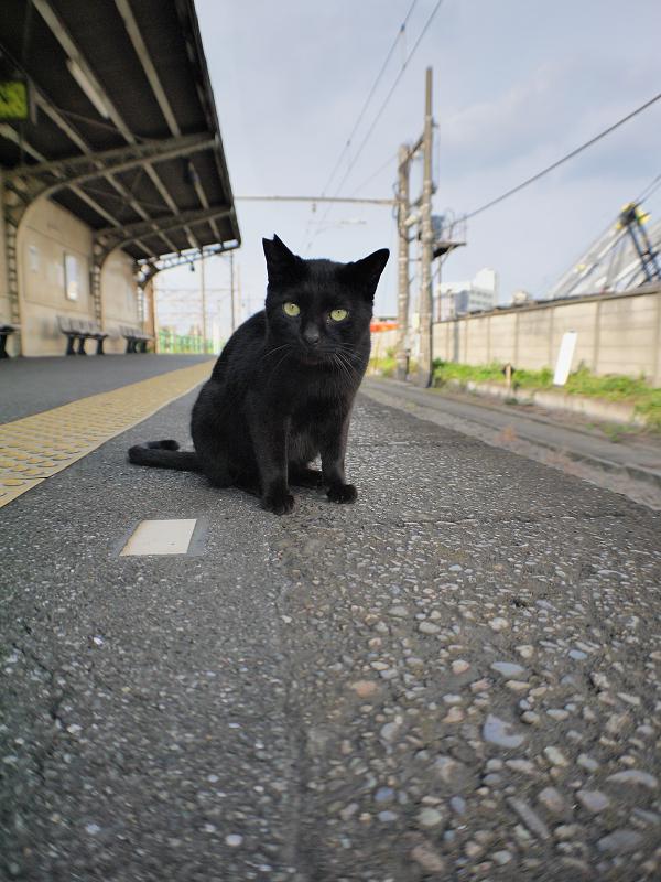 無人のホームと黒猫1