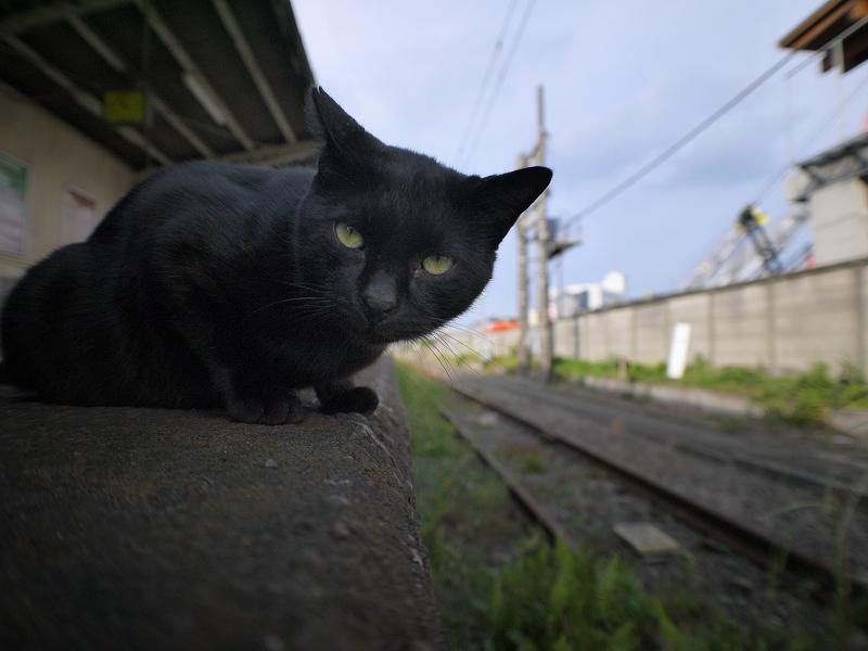 無人のホームと黒猫2