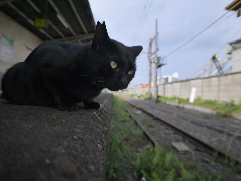 無人のホームと黒猫3