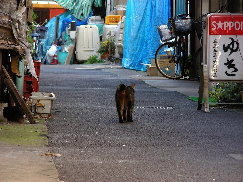 下町路地のキジトラ猫