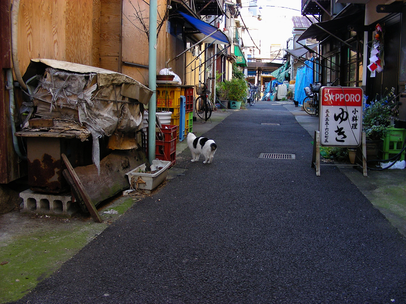 下町路地のブチ柄猫