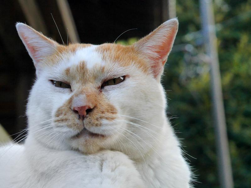 アップ茶白猫