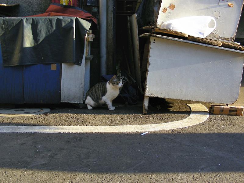閉店中のお店前の猫1