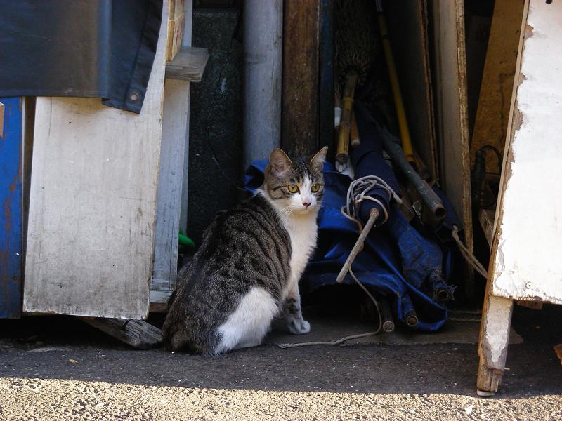 閉店中のお店前の猫2