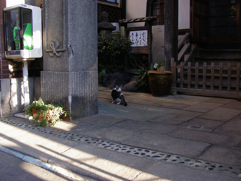 閉店中のお店前の猫3