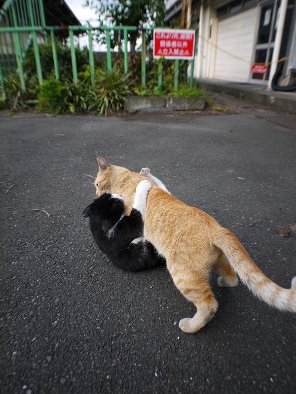取っ組み合いの猫2