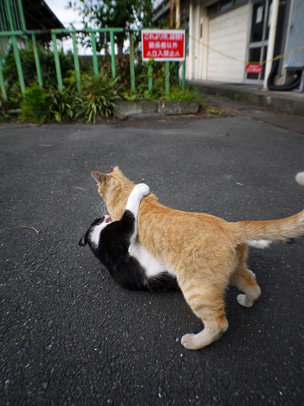 取っ組み合いの猫1