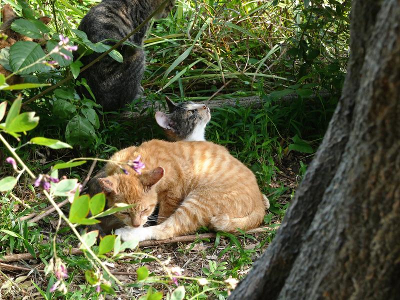 草むら子猫1