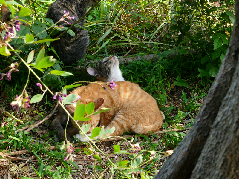 草むら子猫2