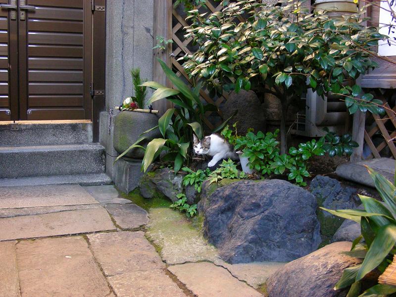 お寺茂みの猫