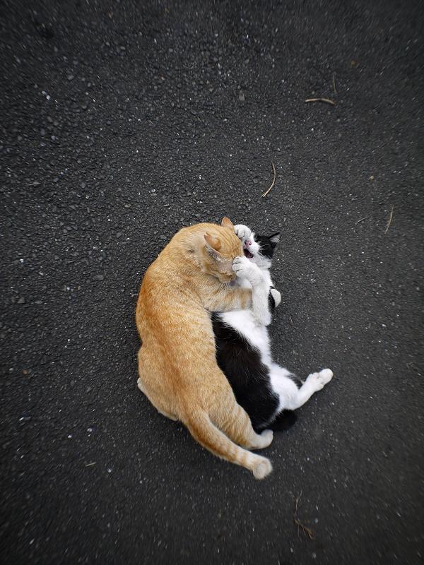 技をかけてる猫1
