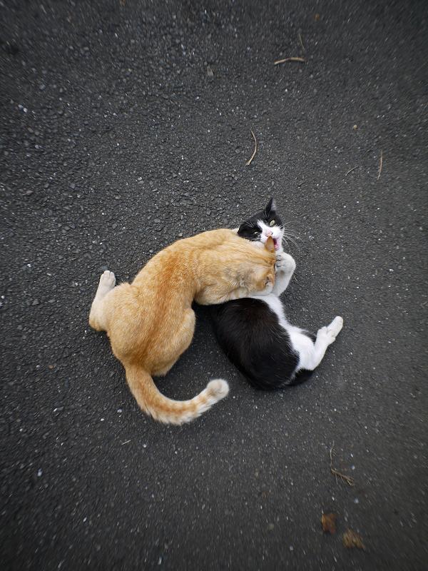 技をかけてる猫2