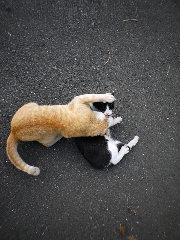 技をかけてる猫3
