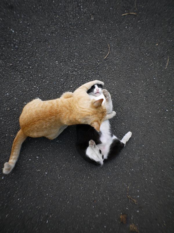 技をかけてる猫4