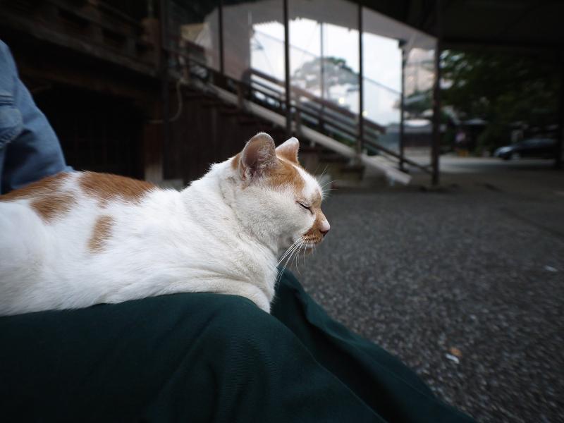境内で佇む茶白猫2