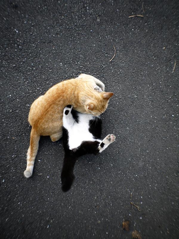 暴れまくる猫たち1