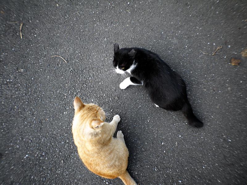 暴れまくる猫たち2