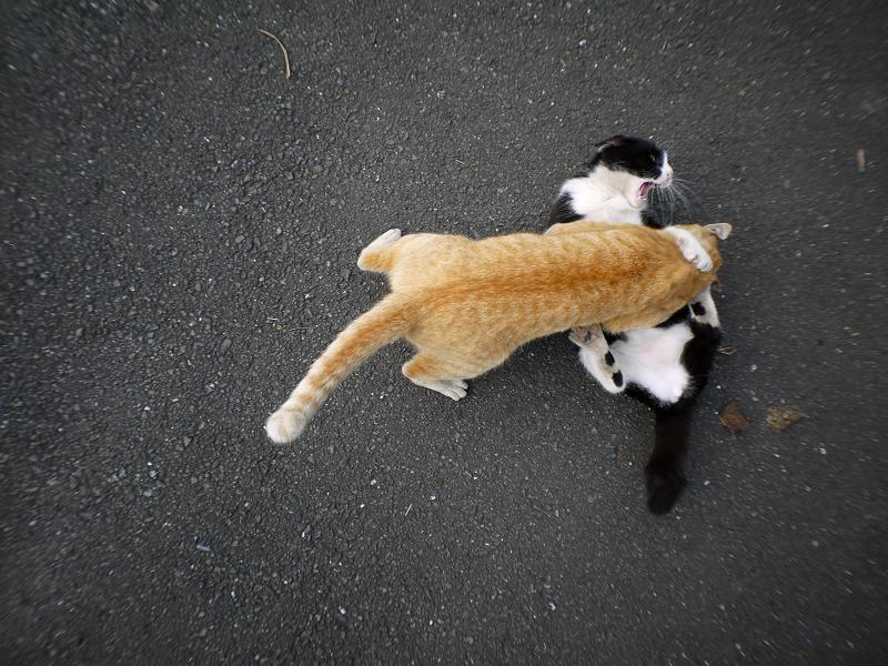 暴れまくる猫たち3