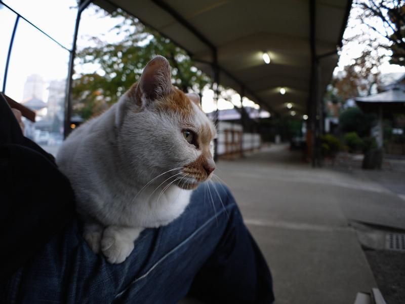お寺の仲良し猫たち1