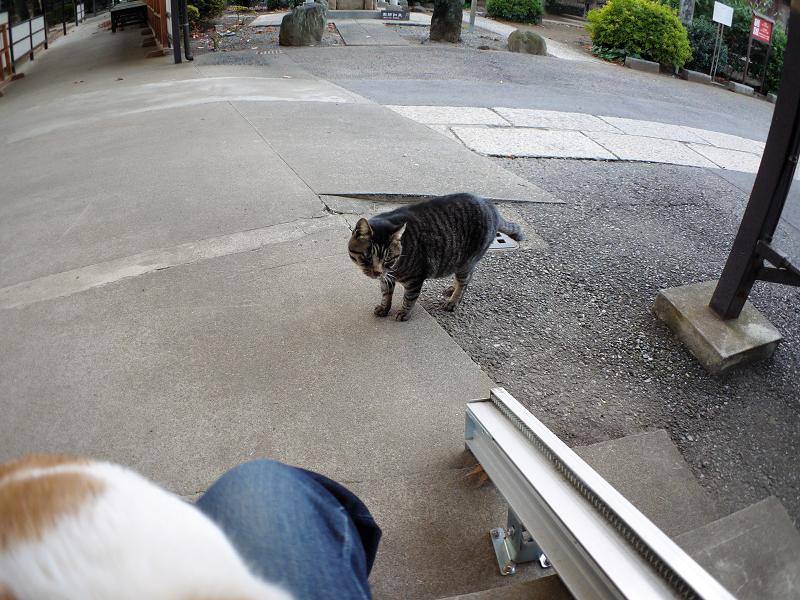 お寺の仲良し猫たち2