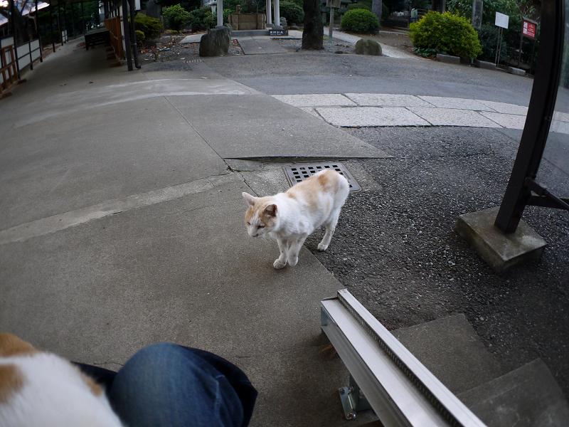 お寺の仲良し猫たち3