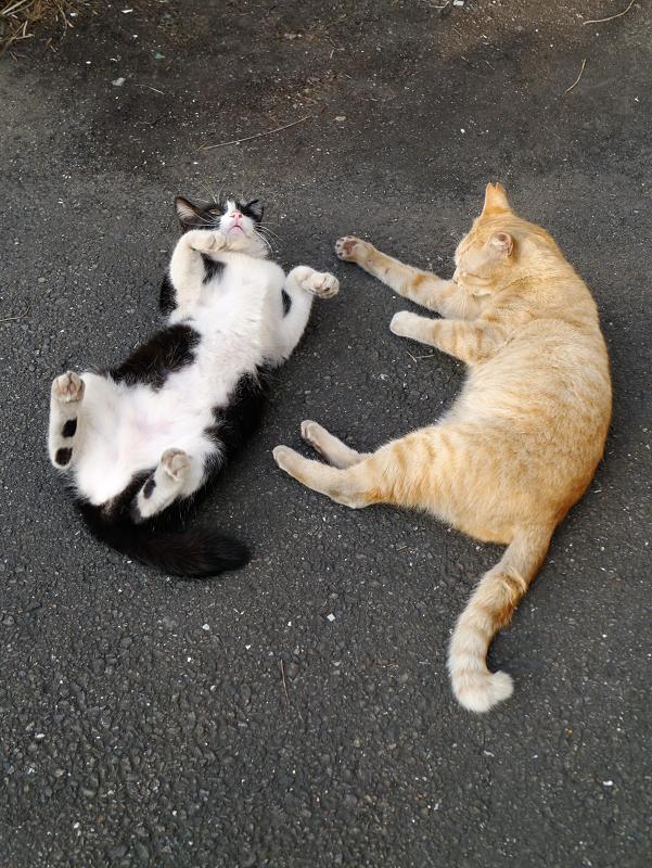 まったり猫と転がる猫2