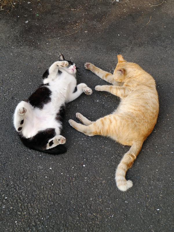 まったり猫と転がる猫1