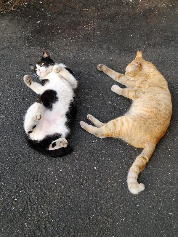 まったり猫と転がる猫3