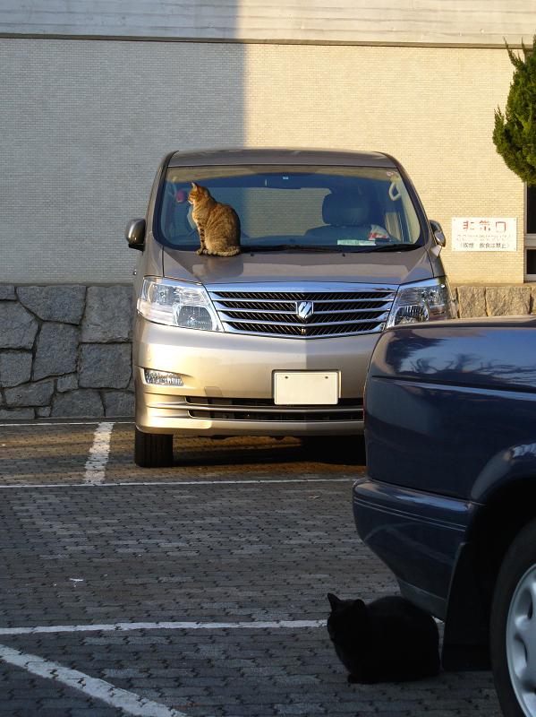 フロントガラスとキジトラ猫1