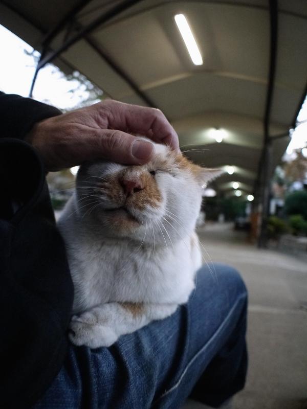 膝に乗ってるお嬢様猫3