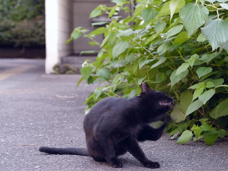 ボス猫から逃げた黒猫