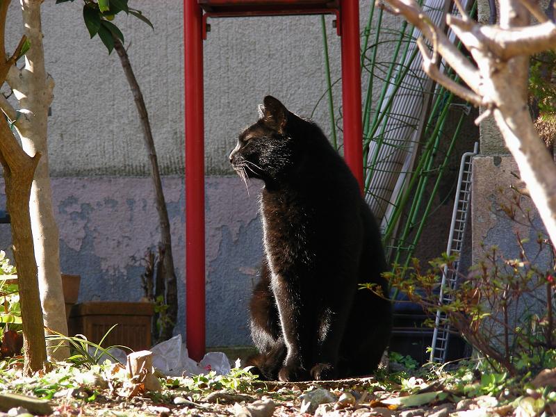 ブロック塀と黒猫1
