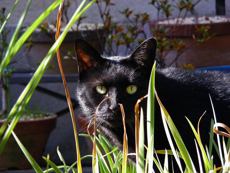 ブロック塀と黒猫3