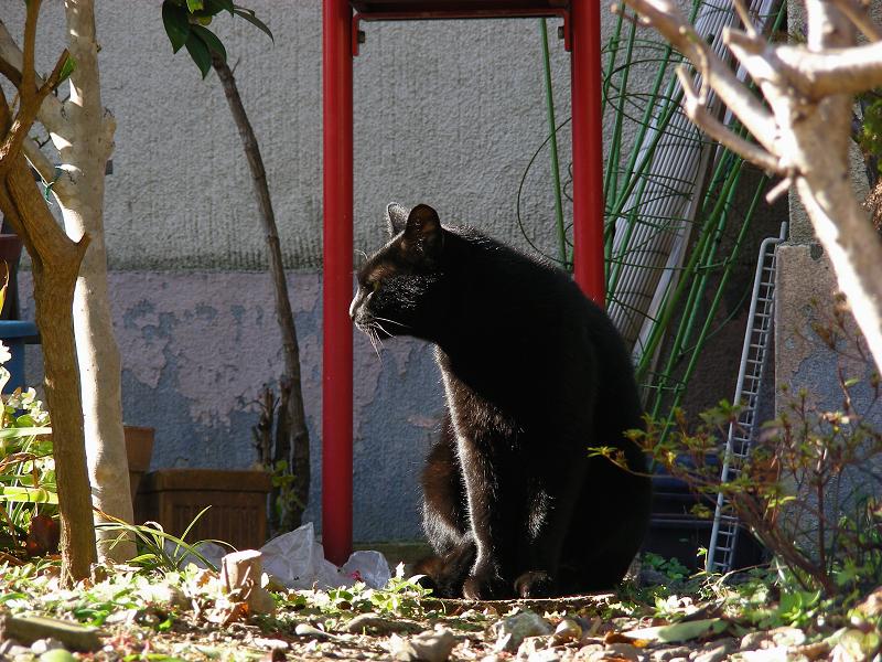 ブロック塀と黒猫2