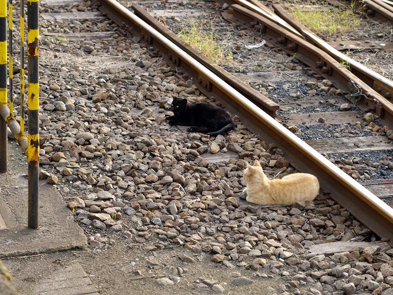線路の猫たち