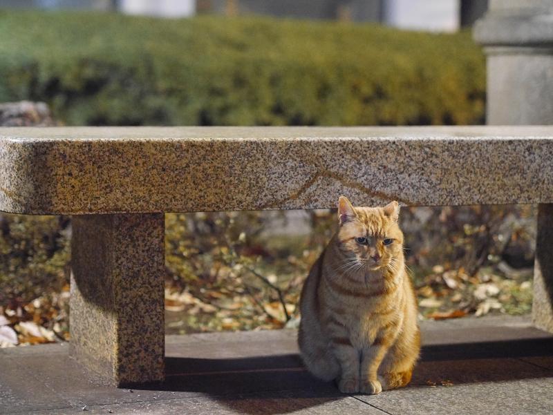 石ベンチの猫1