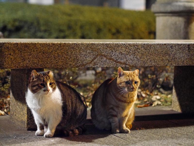 石ベンチの猫2