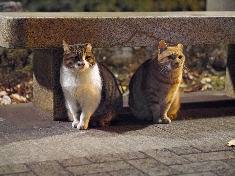 石ベンチの猫3