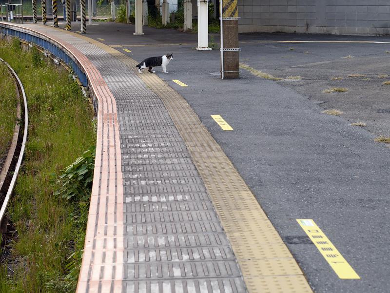 ホームと線路とキジ白猫5