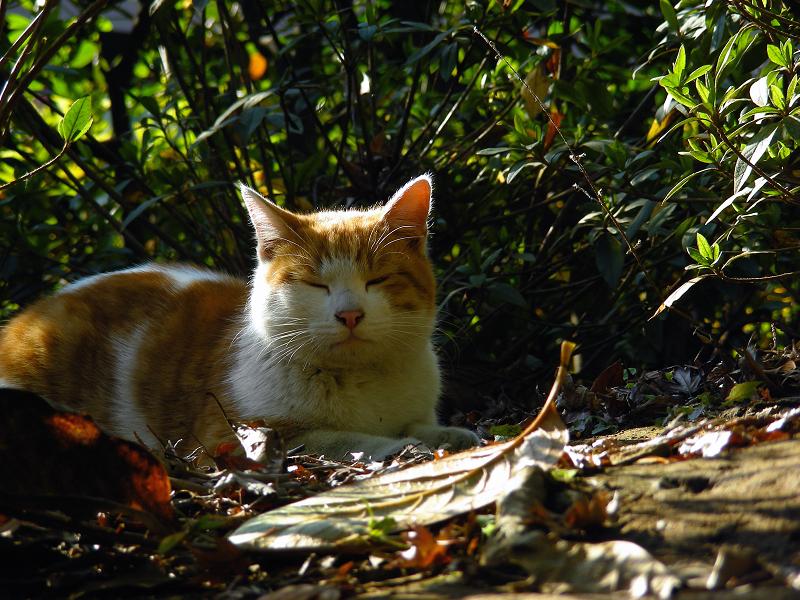 盛り上がった土と茶白猫2
