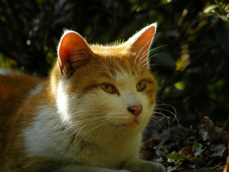 盛り上がった土と茶白猫3