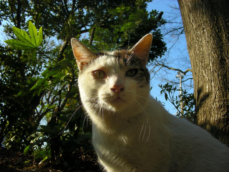 青空バックのキジトラ猫2