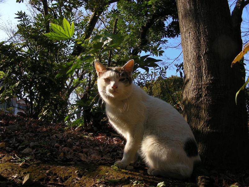 青空バックのキジトラ猫1