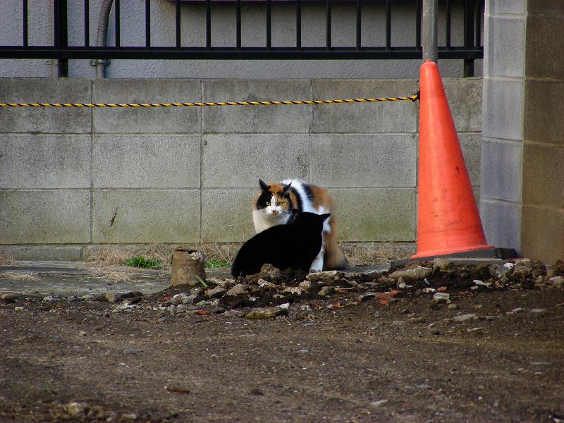 空き地で睨みあってる猫2