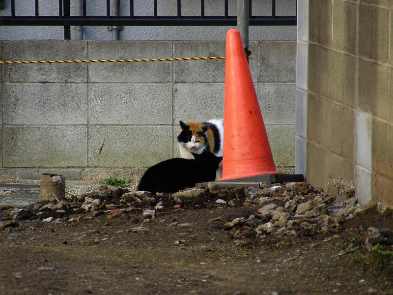 空き地で睨みあってる猫3