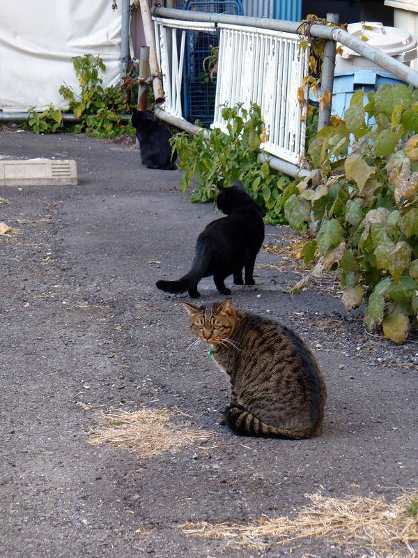 空き地の猫たちの行動1