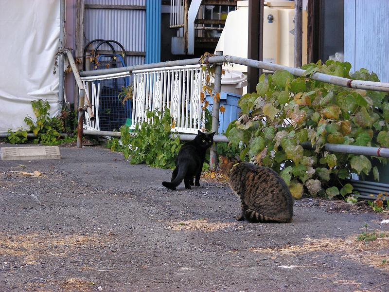 空き地の猫たちの行動2
