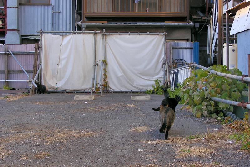 空き地の猫たちの行動3
