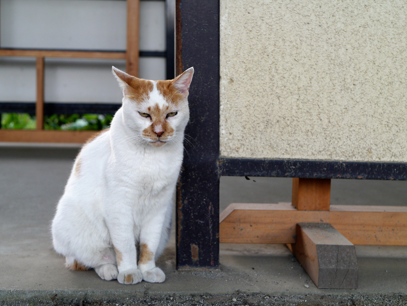 境内を眺める茶白猫2