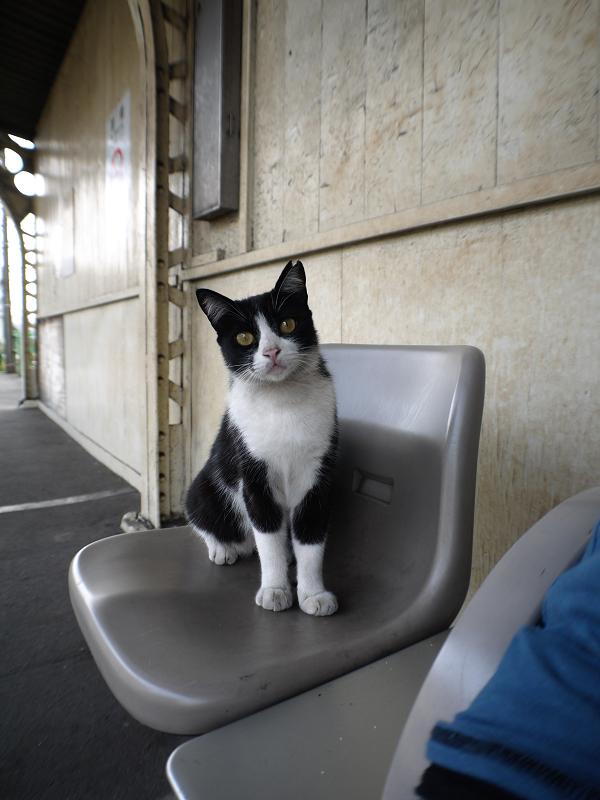 駅ホームのベンチと白黒猫1
